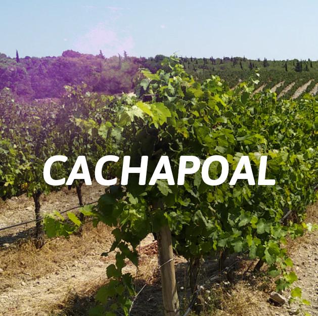 Cachapoal