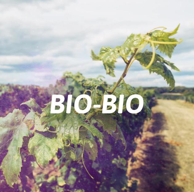 Bio Bio