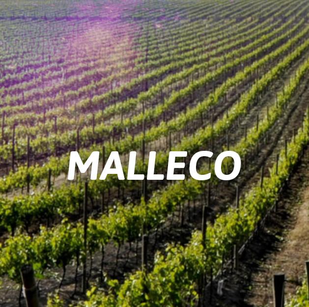 Malleco