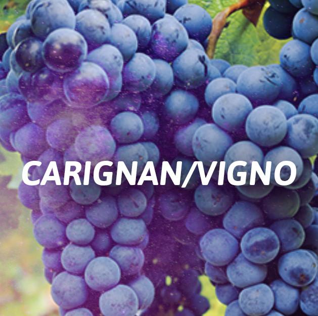 Carignan / Vigno