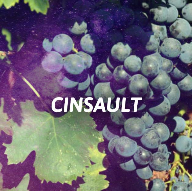 Cinsault