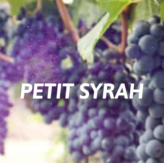 Petit Syrah