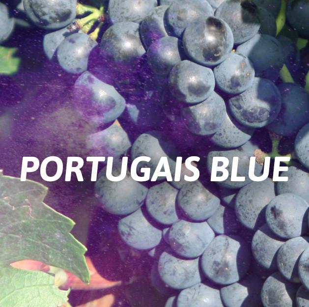 Portugais Blue
