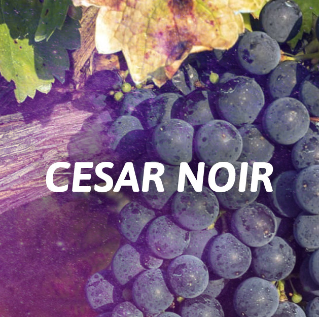 Romano / Cesar Noir