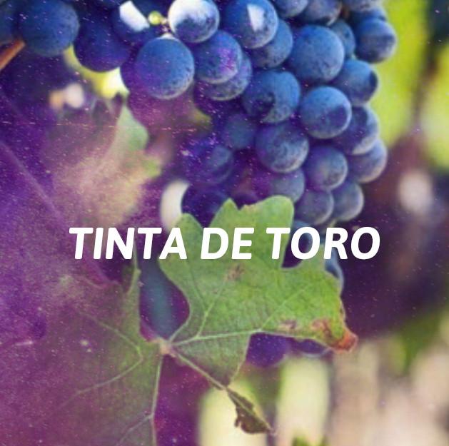 Tinta de Toro